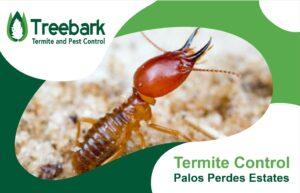 Big Ole Termite Looking Mighty In RPV (Palos Verdes Estates)