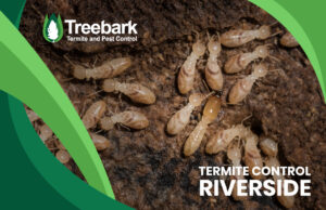 Termites being gross with the words termite control riverside written on the picture