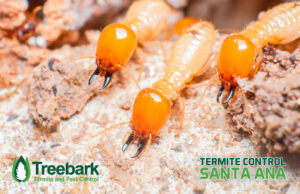 Bunches of Termites in Santa Ana GROSS